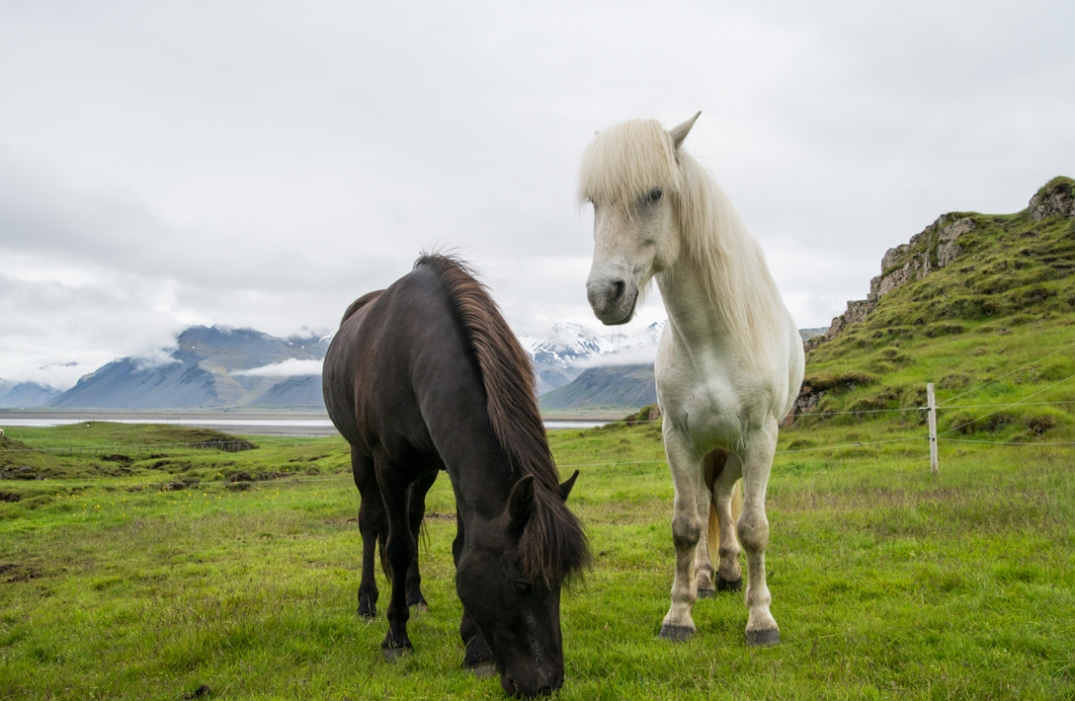 iceland-13-of-34